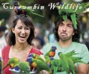 Currumbin-Wildlife