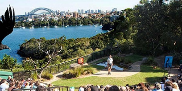 Bird-show-at-Taronga-Zoo