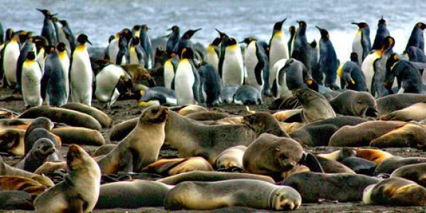 Seal-&-Penguin-Colony